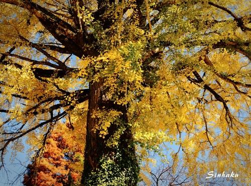 EM593653_Sinhaku.jpg